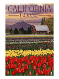 Cambria, California - Tulip Farm Posters by  Lantern Press