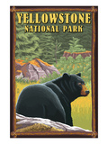 Yellowstone National Park - Black Bear in Forest Prints by  Lantern Press