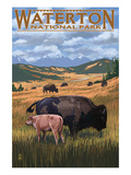Waterton National Park, Canada - Buffalo Herd Art by  Lantern Press