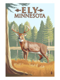 Ely, Minnesota - White Tailed Deer Prints by Lantern Press