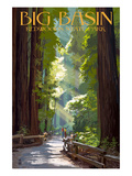 Lantern Press - Big Basin Redwoods State Park - Pathway in Trees Reprodukce