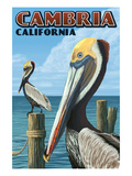 Cambria, California - Brown Pelican Art by  Lantern Press