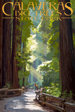 Calaveras Big Trees State Park - Pathway in Trees Print by  Lantern Press