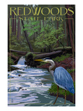 Redwoods State Park - Heron and Waterfall Prints by Lantern Press