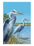 Blue Herons - East Coast Posters by  Lantern Press