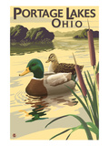 Portage Lakes, Ohio - Mallard Ducks Prints by Lantern Press