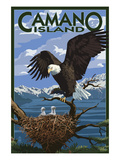 Camano Island, Washington - Bald Eagle and Chicks 高品質プリント : ランターン・プレス
