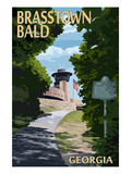 Brasstown Bald, Georgia - Trail Scene Art by  Lantern Press