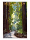 Muir Woods National Monument, California - Pathway Affiche par  Lantern Press