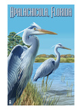 Blue Herons in Grass - Apalachicola, Florida Posters by  Lantern Press