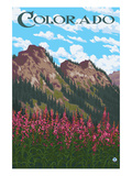 Fireweed and Mountains - Colorado Posters by  Lantern Press