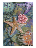 Monterey, California - Tidepool Prints by  Lantern Press