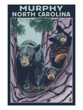 Murphy, North Carolina - Black Bears Prints by Lantern Press 