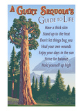 A Giant Sequoia's Guide to Life Print by  Lantern Press