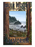 Muir Woods National Monument, California - Trees and Ocean Prints by  Lantern Press