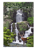 Shenandoah National Park, Virginia - Doyles River Falls Posters by Lantern Press
