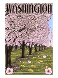 Washington - Cherry Blossoms Prints by Lantern Press 