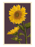 Sunflowers Poster by  Lantern Press