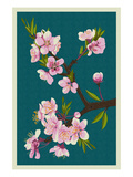 Cherry Blossoms Print by  Lantern Press