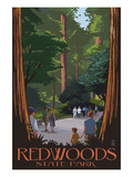 Redwoods State Park - Boardwalk Art by Lantern Press