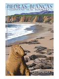 Piedras Blancas Elephant Seal Rookery - California Prints by  Lantern Press