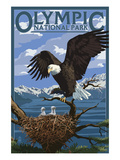 Olympic National Park - Eagle and Chicks Poster von  Lantern Press