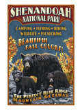 Shenandoah National Park, Virginia - Bear and Cubs Posters by Lantern Press 