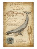 Blue Whale Davinci Prints by  Lantern Press