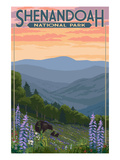 Shenandoah National Park, Virginia - Black Bear and Cubs Spring Flowers Poster by  Lantern Press
