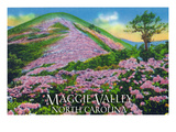 Maggie Valley, North Carolina - View of Purple Rhododendron in Bloom Near Blue Ridge Parkway Prints by Lantern Press 