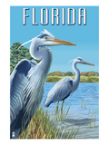 Blue Herons in Grass - Florida Prints by  Lantern Press