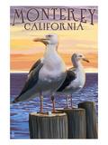 Monterey, California - Sea Gulls Posters par  Lantern Press