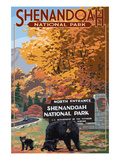 Shenandoah National Park, Virginia - Black Bear and Cubs at Entrance Poster von  Lantern Press