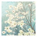 Dogwood Blossoms I Premium Giclée-tryk af James Wiens