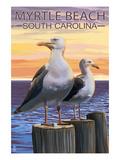 Myrtle Beach, South Carolina - Seagulls Poster von  Lantern Press