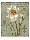 Histoire Naturelle II Posters por Daphne Brissonnet