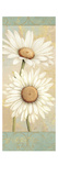 Beautiful Daisies I Giclee Print by Daphne Brissonnet