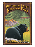 Waterton Lakes National Park, Canada - Bear in Forest Prints by  Lantern Press