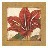 Amaryllis Bloom Giclee Print by Hugo Wild