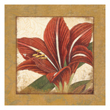 Amaryllis Bloom Giclee Print by Wild Apple Portfolio