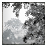 Sun Dappled II Prints by Wild Apple Photography