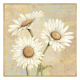 Beautiful Daisies I Poster by Daphne Brissonnet