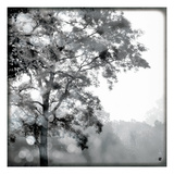 Sun Dappled I Reproduction procédé giclée par Wild Apple Photography