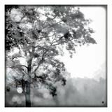 Sun Dappled I Print by Wild Apple Photography