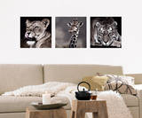 The Wild Side Of Life Wall Decal by Günter Lenz