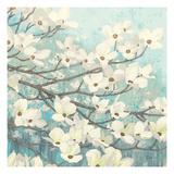Dogwood Blossoms II Premium Giclée-tryk af James Wiens