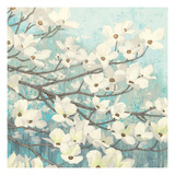 Dogwood Blossoms II Premium Giclee Print by James Wiens