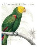 Parrot Botanique I Giclee Print by Wild Apple Portfolio