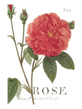 Pink Rose Giclee Print by Wild Apple Portfolio