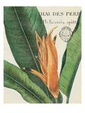 Botanique Tropicale II Prints